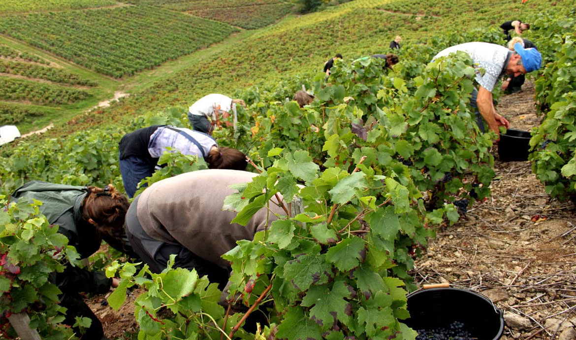 Agricultural labor: Large quantity, low quality