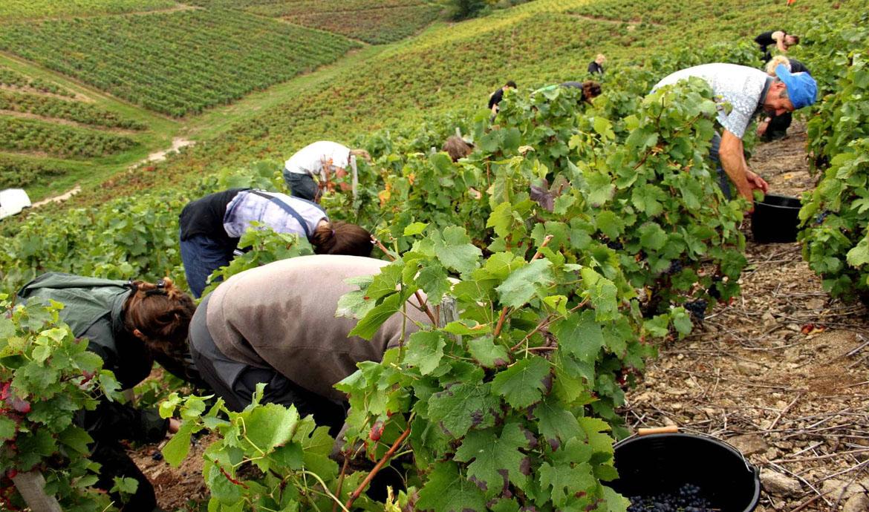 Lao động nông nghiệp: Số lượng lớn, chất lượng thấp