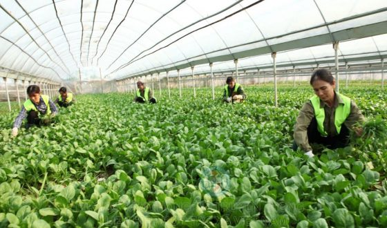 Agricultural service cooperatives need to expand production and business