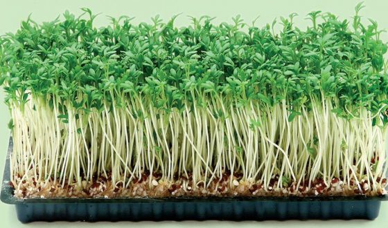 Growing sprouts income 100 million / month